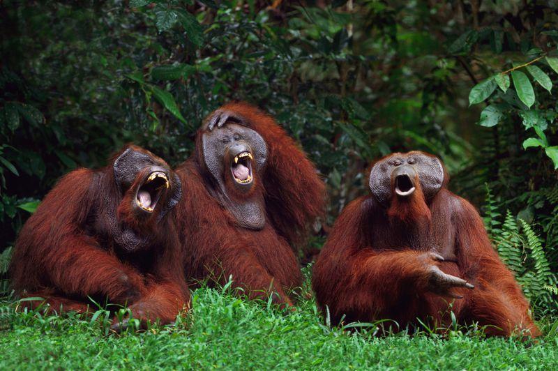 Witz des Tages: Kommen ein Mann und ein Affe in eine Bar...