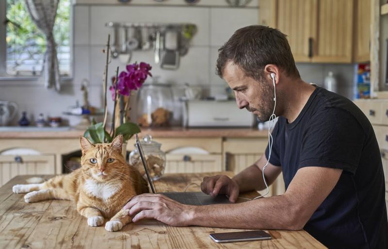 Der Single-Mann will seine Katze nicht für ein Date aufgeben